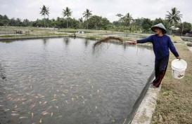 KKP Dorong Budidaya Cacing Sutera untuk Pembenihan Ikan Air Tawar