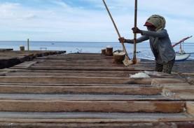 Stok Masih Menumpuk, Harga Garam Rakyat Kembali Turun