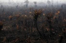Waspada, Kalteng Mulai Diancam Kebakaran Hutan & Lahan