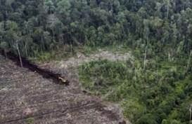 Restorasi Gambut di Jambi Capai 77.528 Hektare