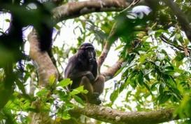Tangerang Siapkan Konservasi Monyet di Solear