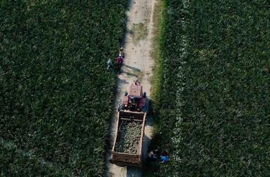 Pengembangan Produk Hortikultura di Sumsel Lebih Menguntungkan