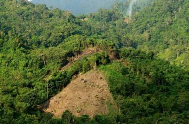Belum Ada Redistribusi Kawasan Hutan di Rejang Lebong