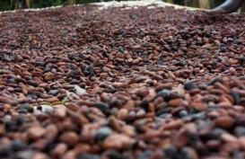 Papua Jajaki Kerja Sama Pengembangan Cokelat dengan Belgia