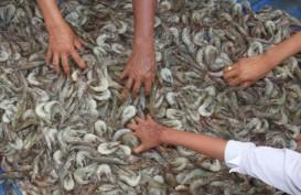 Cegah Penyebaran Penyakit, KKP Larang Penggunaan Induk Udang dari Tambak