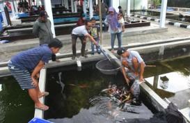 Mataram Jadi Tuan Rumah Kontes Ikan Koi 2019