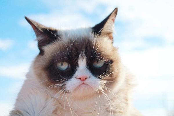Grumpy Cat alias Tardar Sauce - Facebook