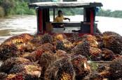 Teknolog Novel Algae Bisa Beri Nilai Ekonomis pada Limbah Sawit