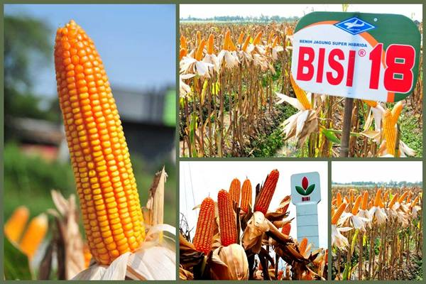 PT BISI International Tbk. - bisi.co.id