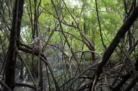 Chevron Gandeng YKAN untuk Selamatkan Ekosistem Mangrove