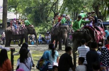 Lebaran, 11 Atraksi Siap Hibur Pengunjung Kebun Binatang Surabaya