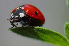Jutaan Kumbang Kecil Tertangkap Radar