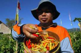 Cabai Merah Kerek Inflasi Mei di Kota Malang