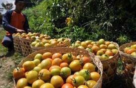 Tomat Picu Inflasi Mei di Sulawesi Utara