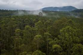 Teknik Silin Mampu Jaga Kualitas Tutupan Lahan Hutan…