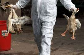 Waspadai Mutasi Virus Flu Burung, Pengawasan Pasar Unggas Hidup Diperluas