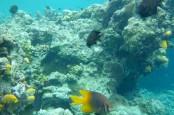 PENINGKATAN KUNJUNGAN WISMAN : Bunaken Diusulkan Bangun Zonasi Bahari