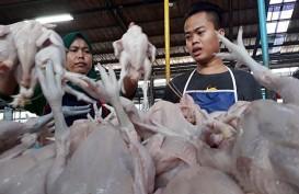 Produksi Ayam Mulai Dikurangi