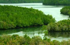 Japesda Gorontalo Laporkan Pengrusakan Mangrove di Pantai Ratu