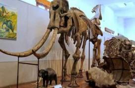 Warga Ngawi Temukan Fosil Gajah Purba