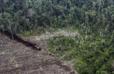 Moratorium Izin Pemanfaatan Hutan Alam dan Lahan Gambut Bakal Permanen