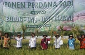 Bulog Kerjasama On Farm dengan UNS di Eks Karesidenan Surakarta