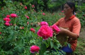 Peduli Lingkungan Lewat Gerakan Taman Bunga