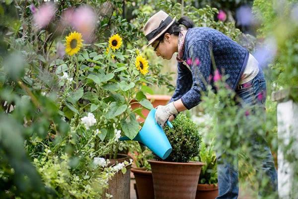 Berkebun bermanfaat untuk kesehatan mental. - Istimewa
