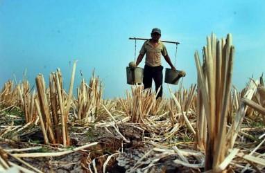 Hari Tanpa Hujan Kategori Ekstrem Diperkirakan Terjadi di Jatim, Bali, dan NTT