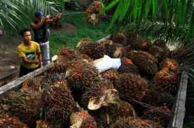 Masihkah Terkait Deforestasi dengan Pembukaan Kebun…