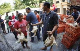 Perbaikan Data Populasi Ayam Mendesak