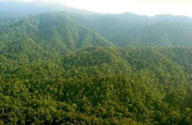 Papua Barat Bakal Wujudkan Kawasan Hutan Konservasi 70 Persen