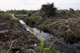 Sejumlah Lahan Gambut Berkondisi Menolak Air