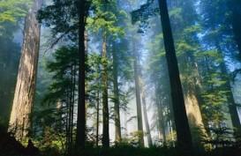 Pengalihan Status 53.000 Hektare Hutan Penuh Risiko
