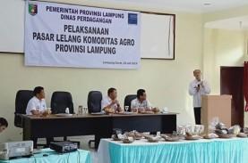 Pasar Lelang Komoditas Agro Digelar di Lampung Barat