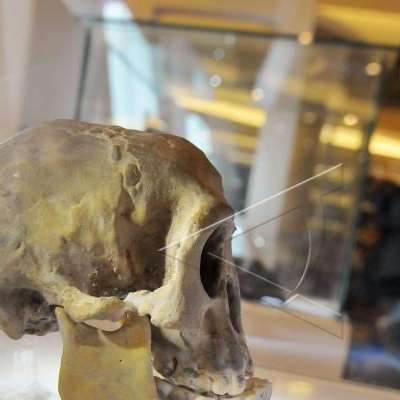 Temuan Fosil Manusia Purba Di Brebes Bisa Ubah Sejarah Kabar24 Bisnis Com