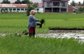 Konversi Lahan Pertanian di Jabar Konsekwensi Kebutuhan Industri dan Perumahan
