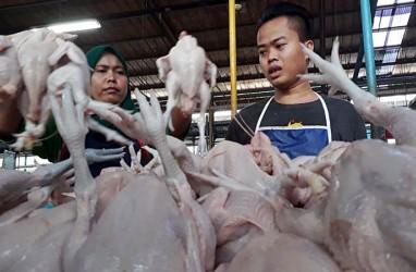 Harga Ayam Diyakini Segera Mengacu Referensi Kemendag
