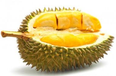 Musim Durian Tiba, Pulau Bintan jadi Tujuan Kunjungan Warga Batam
