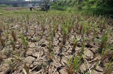 Kemarau, 500.000 Hektare Sawah di Jabar Masih Bisa Diairi