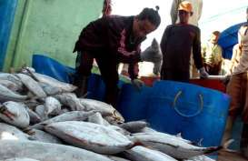 Industri Pengolahan Ikan di Bitung Keluhkan Harga Bahan Baku