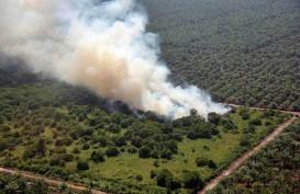 BNPB Minta Polri Tindak Tegas Pembakar Lahan