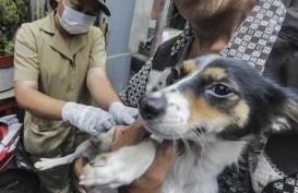 Kementan Beri Vaksin Rabies Gratis untuk 2.000 Hewan di Garut
