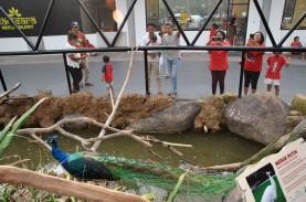 Pemelihara Merak & Elang di Denpasar Dihukum 7 Bulan…