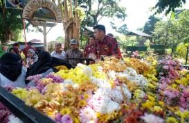 Beautiful Malino, Pengunjung Bakal Disambut Ribuan Bunga