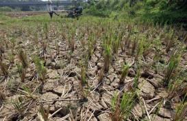 Distan Sukabumi Pasang Pompa Air untuk Persawahan