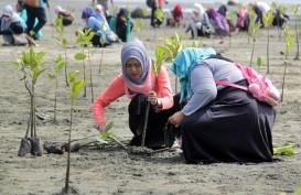 2.000 Bibit Mangrove Ditanam di Pesisir Pantai Cirebon