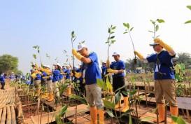 Pemprov DKI Jakarta Gencar Aksi Tanam Mangrove