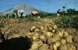 BNPP : 5 Juta Hektare Lahan di Perbatasan Berpotensi Dikembangkan