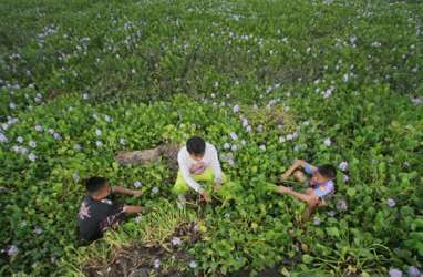 Eceng Gondok Danau Limboto Diolah Jadi Kerajinan Tangan